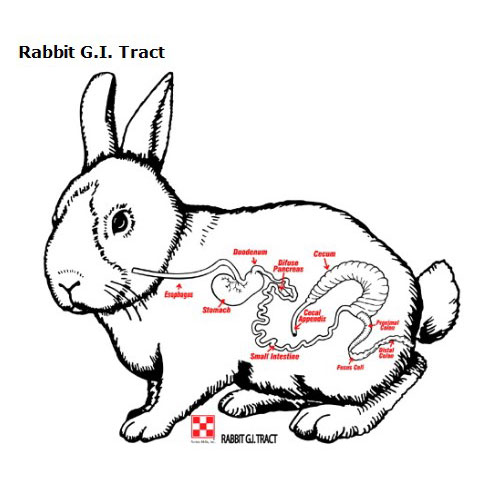 image of the rabbit digestive tract diagram