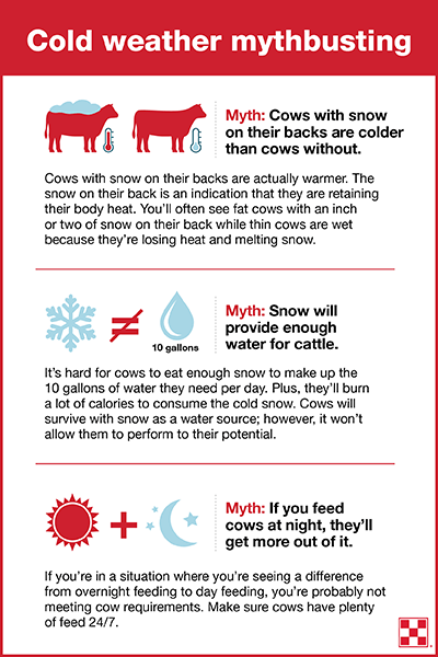 Cold Weather Cattle Tips
