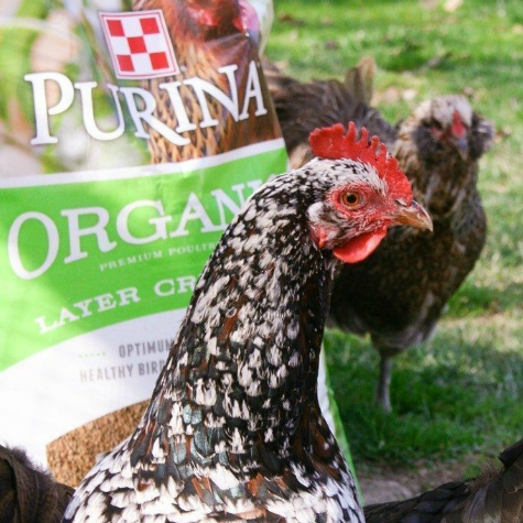 chickens and organic poultry feed bag