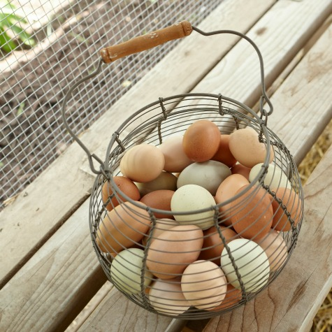 image of a basket of eggs with omega-3