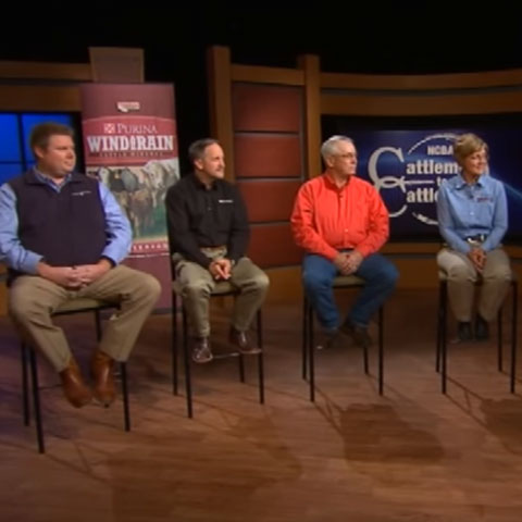 Cattle minerals panel discussion - Cattlemen to Cattlemen Preview Image