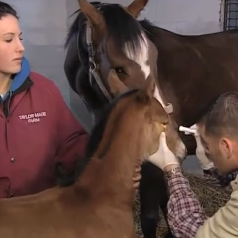 Choosing an Equine Veterinarian Preview Image