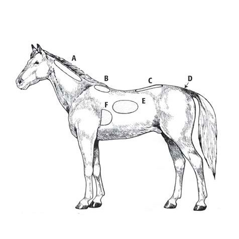 image of horse body condition scoring chart