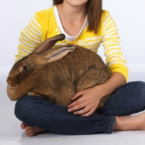 Image of a girl holding a big bunny